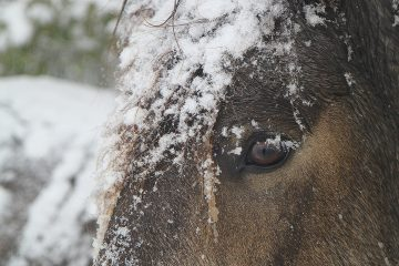 pferdegesundheit-carlshof-jade-blog