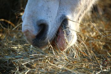 pferdefütterung-carlshof-jade-blog