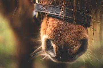 pferdegesundheit-carlhof-jade-blog