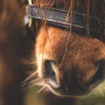 Pferde entwurmen: Wie denn nun? <br> Dr. Anne Becher informiert über selektive Entwurmung